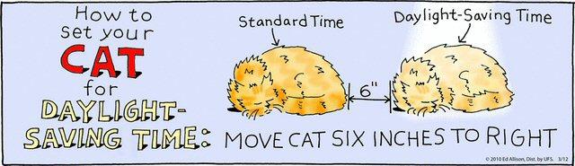 Cat-comic