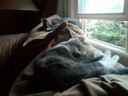 Sadie+Mindy-asleepcouch