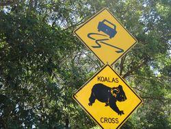 Koala-crossing