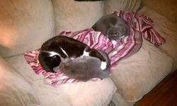 Oliver+Sadie+Mindy-all asleep