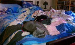 Ollie+Mindy-asleep on clothes-bed