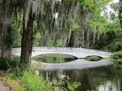 Magnolia-bridge