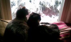 Sadie+Ollie-snow