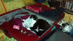 Ollie-suitcase