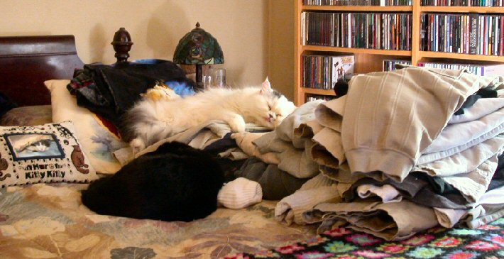 Ollie and Dinah sleeping on a pile of fresh laundry